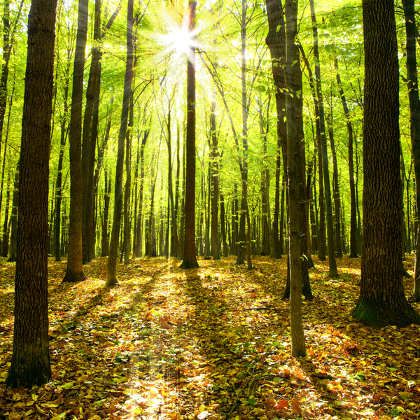 ecosystem services climate change