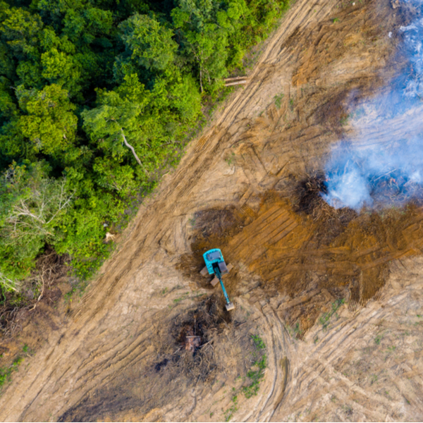 amazon fires green growth degrowth